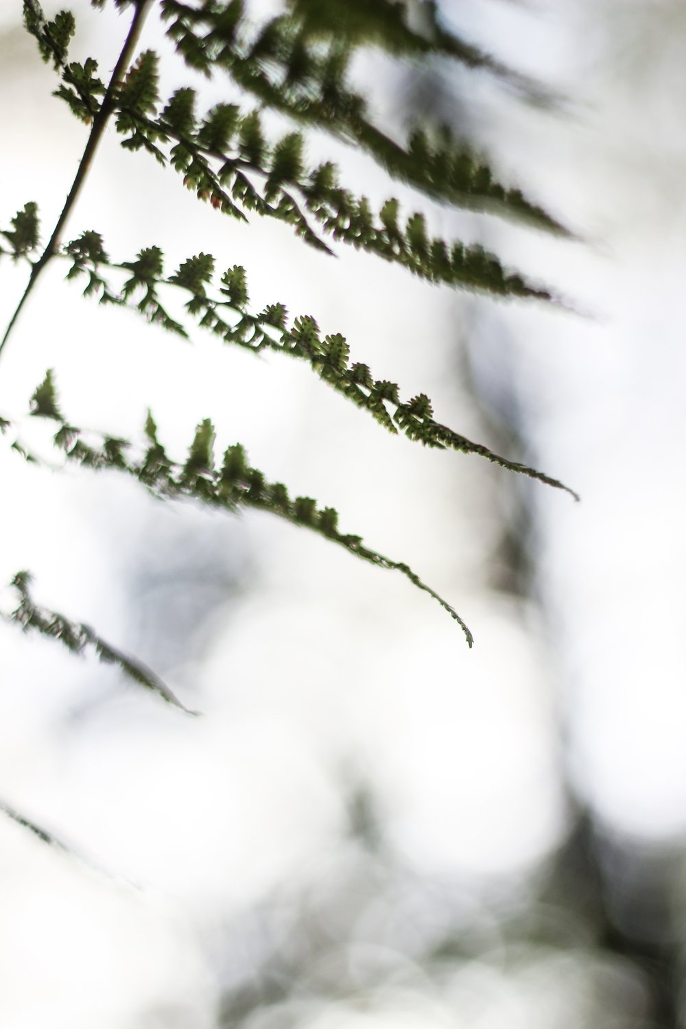 Ferns with bokeh