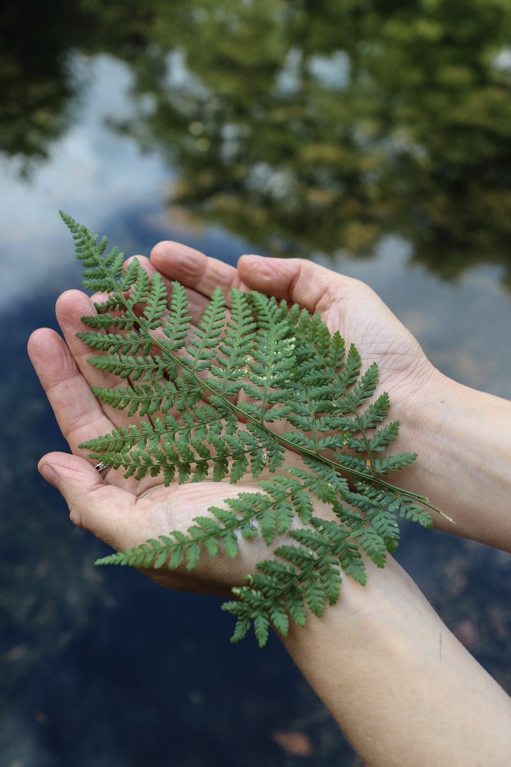 Fern in hands