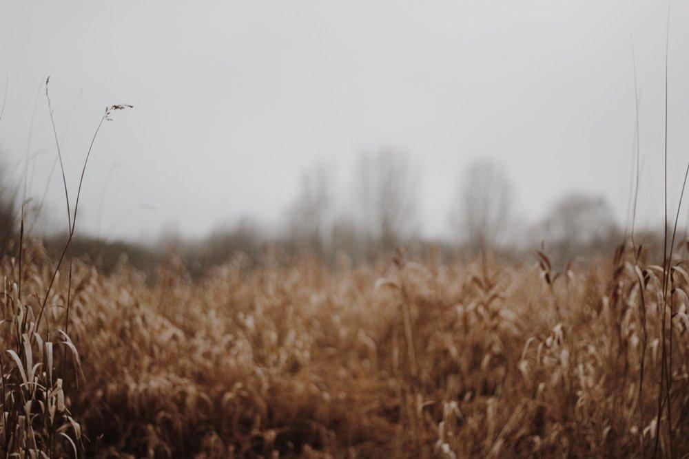 A winter meadow