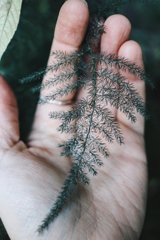 Fern in hand