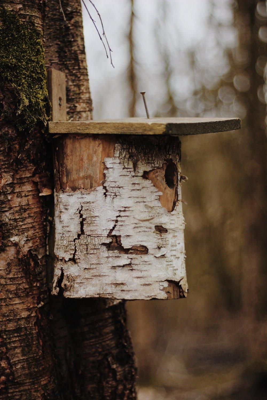 Bird house in woods