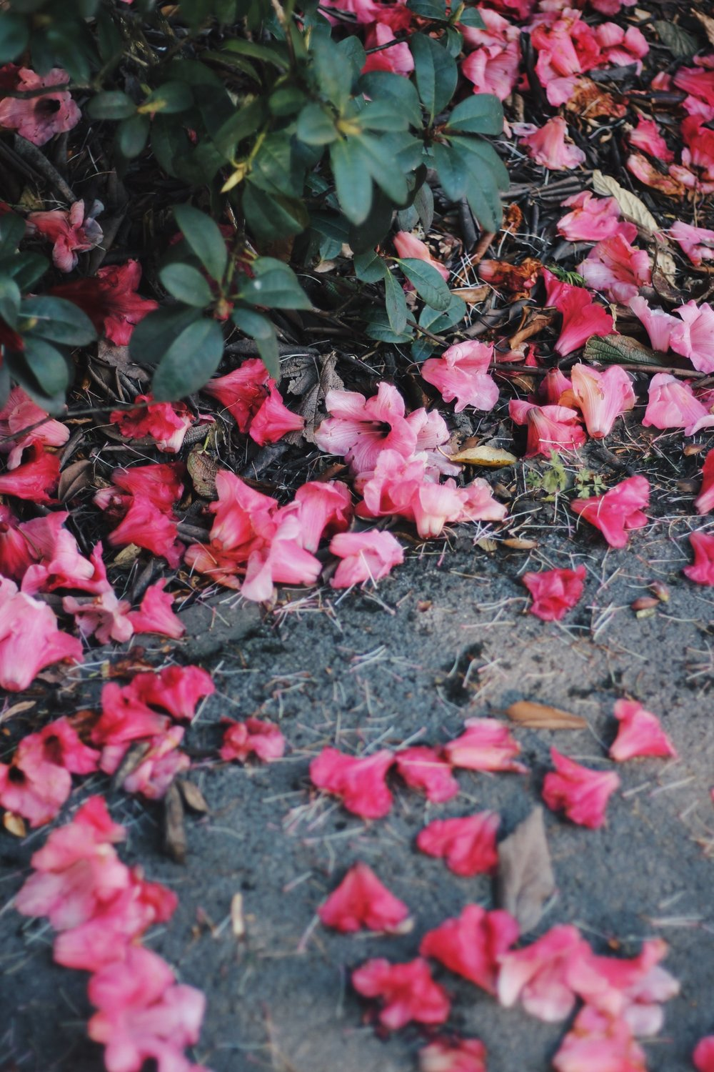 pink flowers on the ground