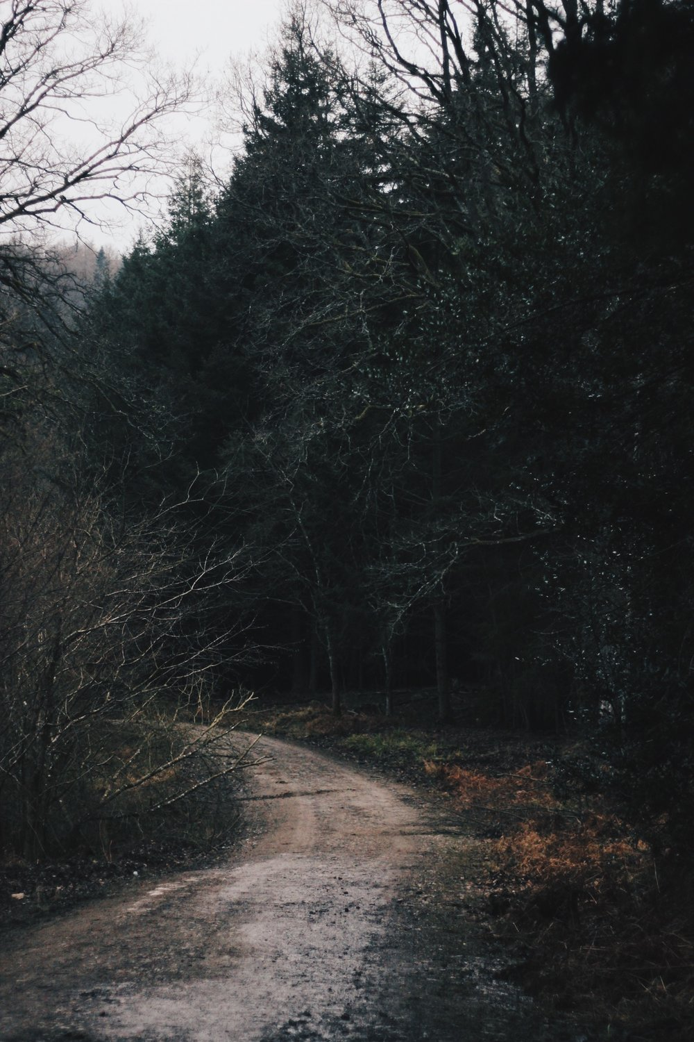 Forest of Dean, wooded path