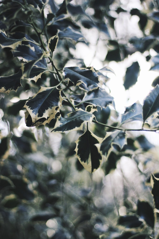 Leaves, Bokeh