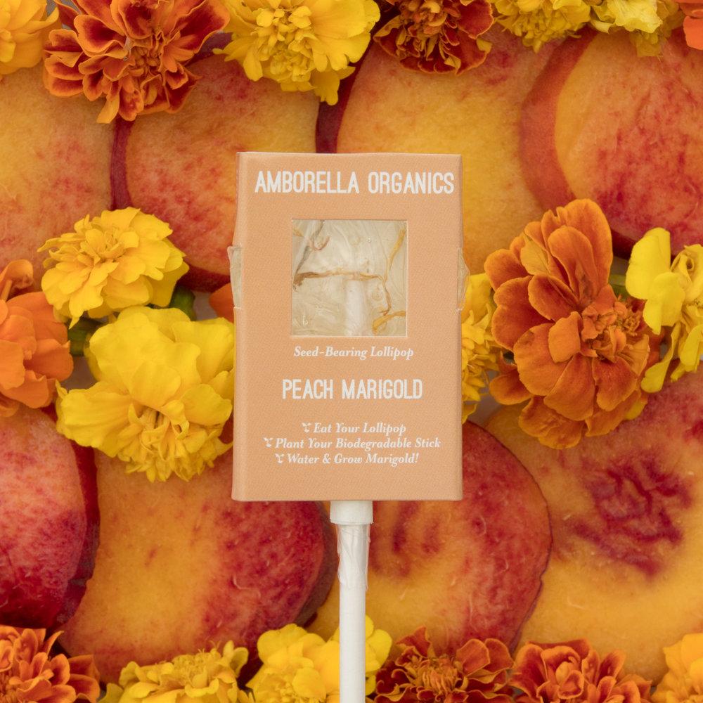 Peach Marigold 01A.jpg