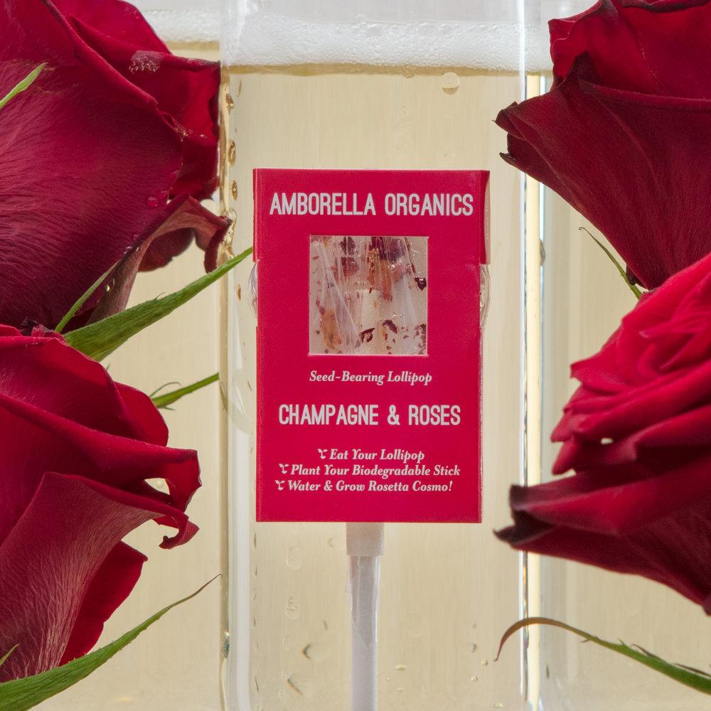 Champagne Roses 01- (1).jpg