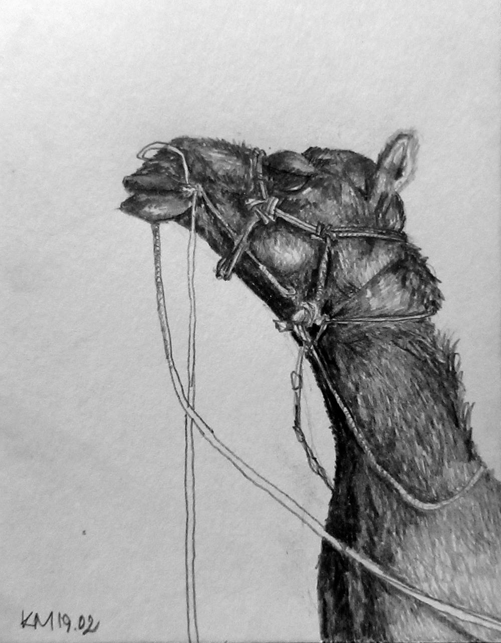 02.14 camel.jpg