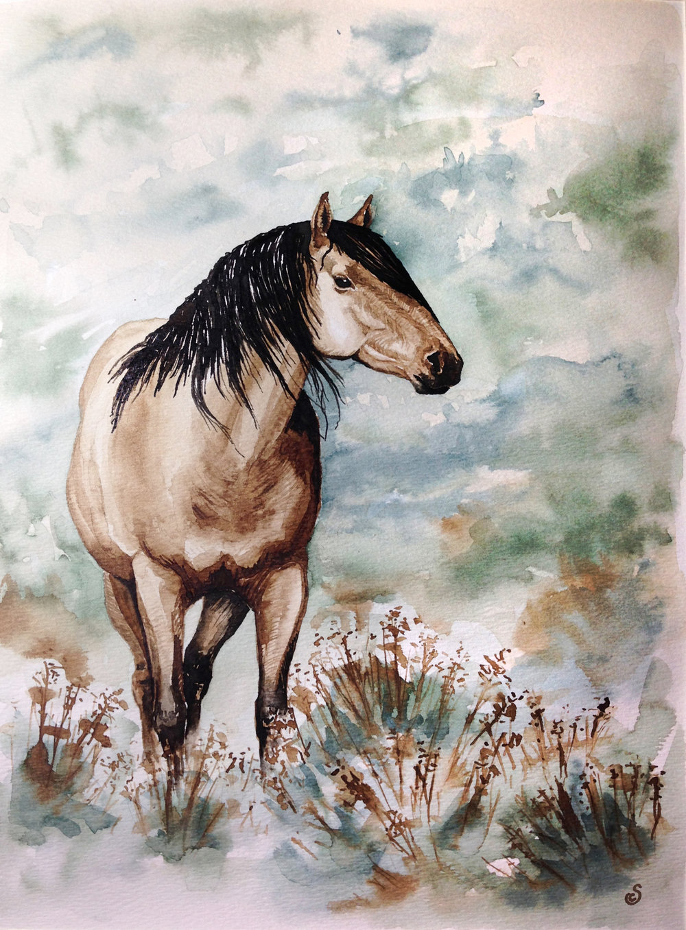Kiger Mustang, India Ink and Watercolor on Paper