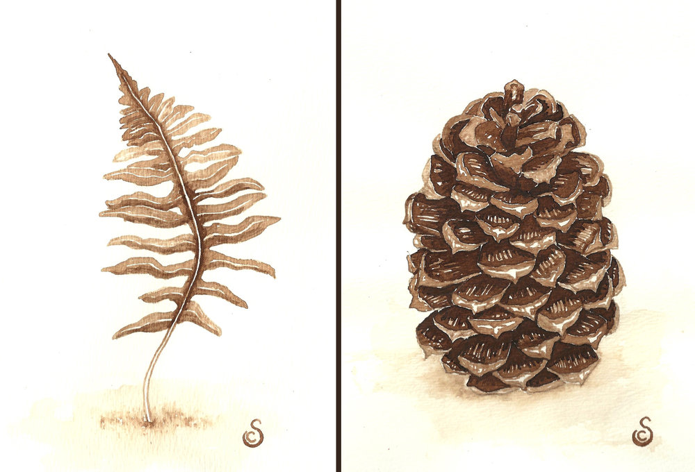 Fern and Pinecone, Walnut Ink on Paper
