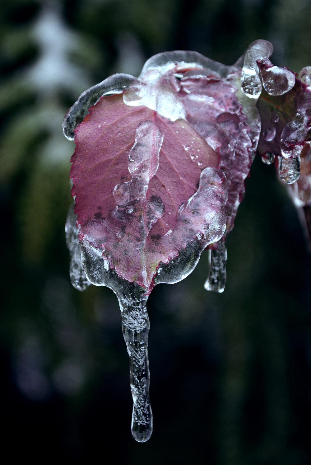 Freezing Rain II, Portland, OR