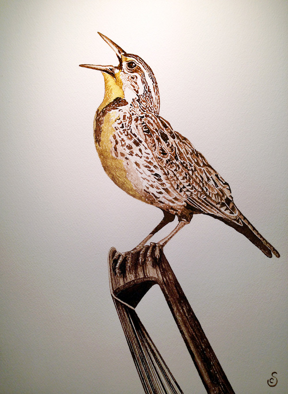 Western Meadowlark, Walnut Ink and Watercolor on Paper