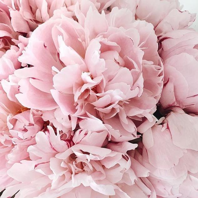 Pink Flower.jpg