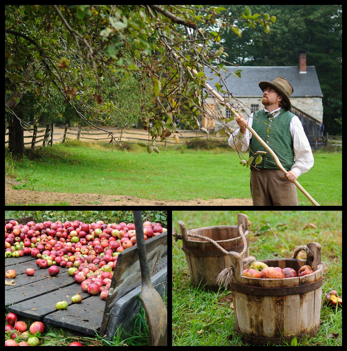 apples at Sturbridge Village