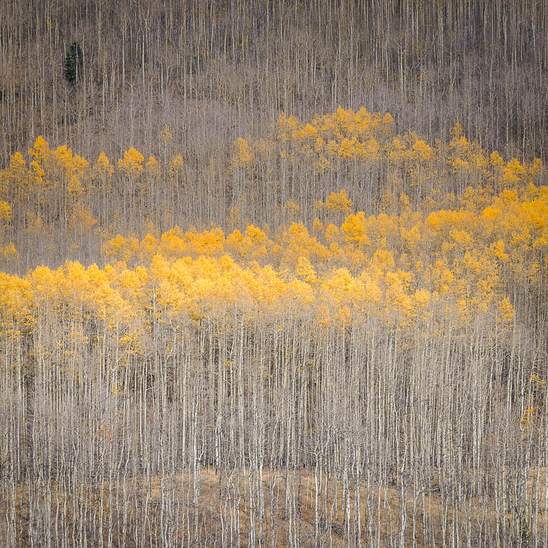 Fall Colors -