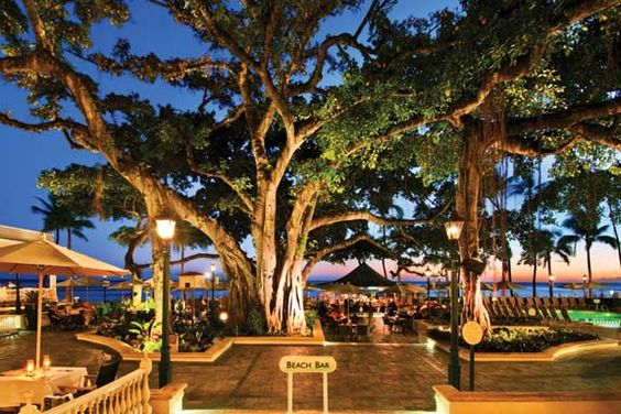Banyan tree at Moana Surfrider
