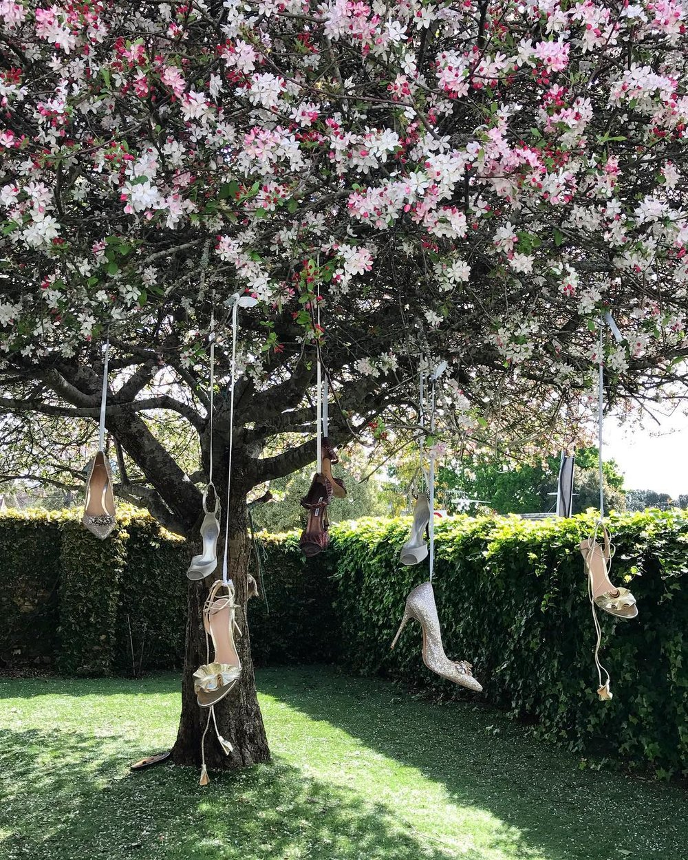 Grove's favourite shoes in her favourite tree. Image Clare Grove.