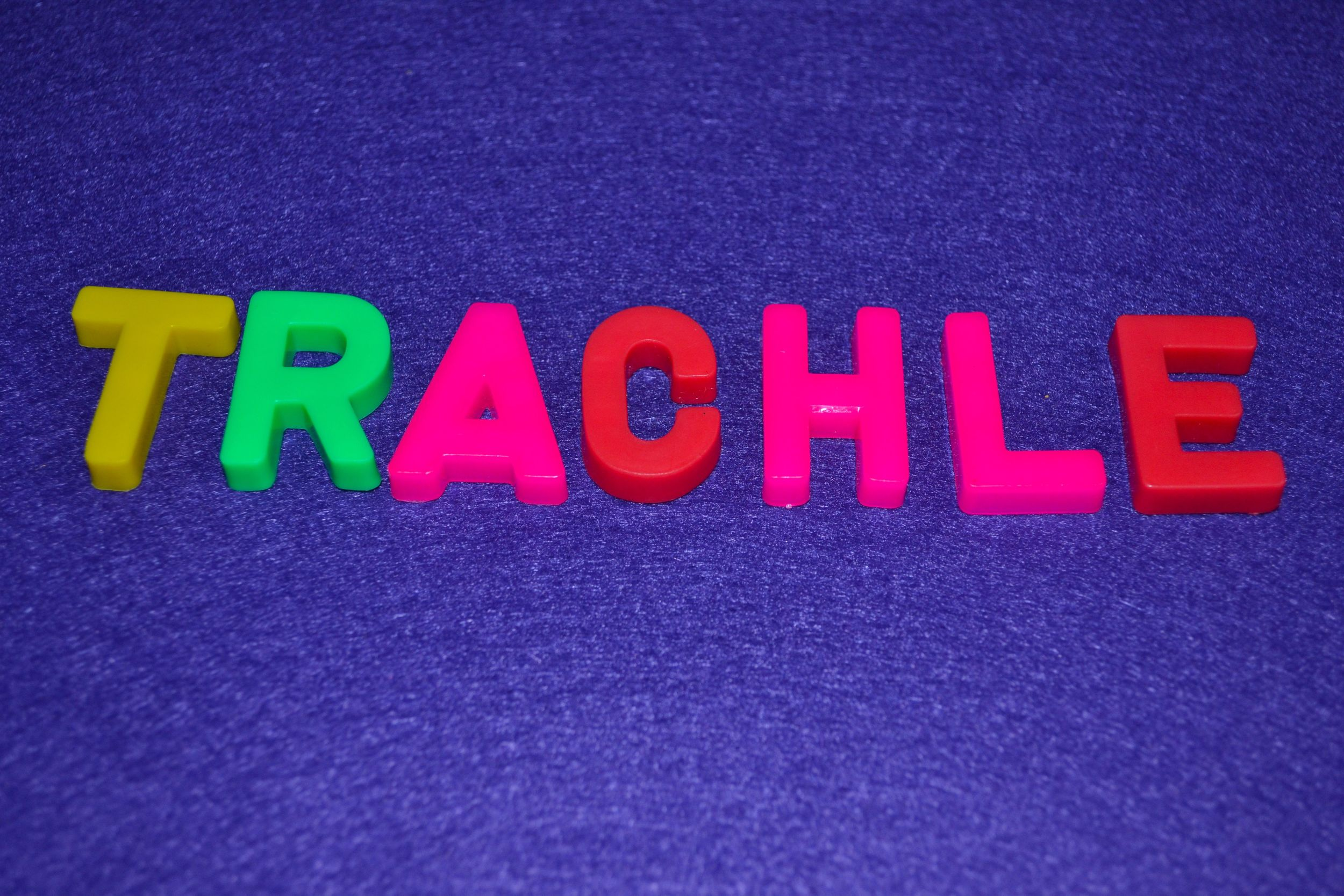 trachle