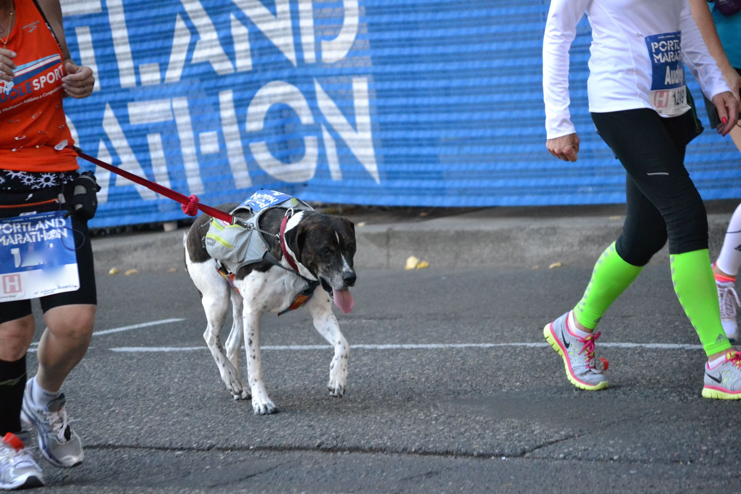 portlandmarathon.dog1