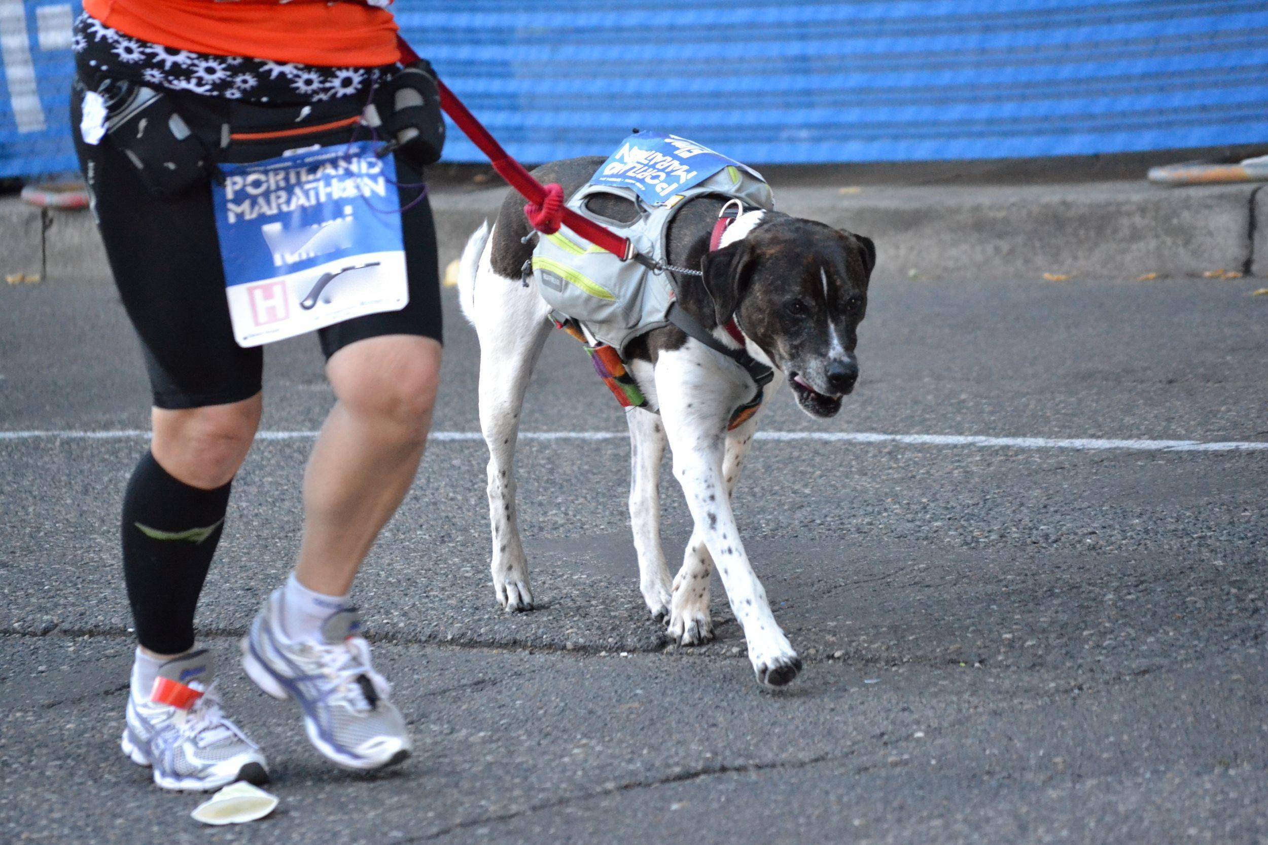 portlandmarathon.dog3