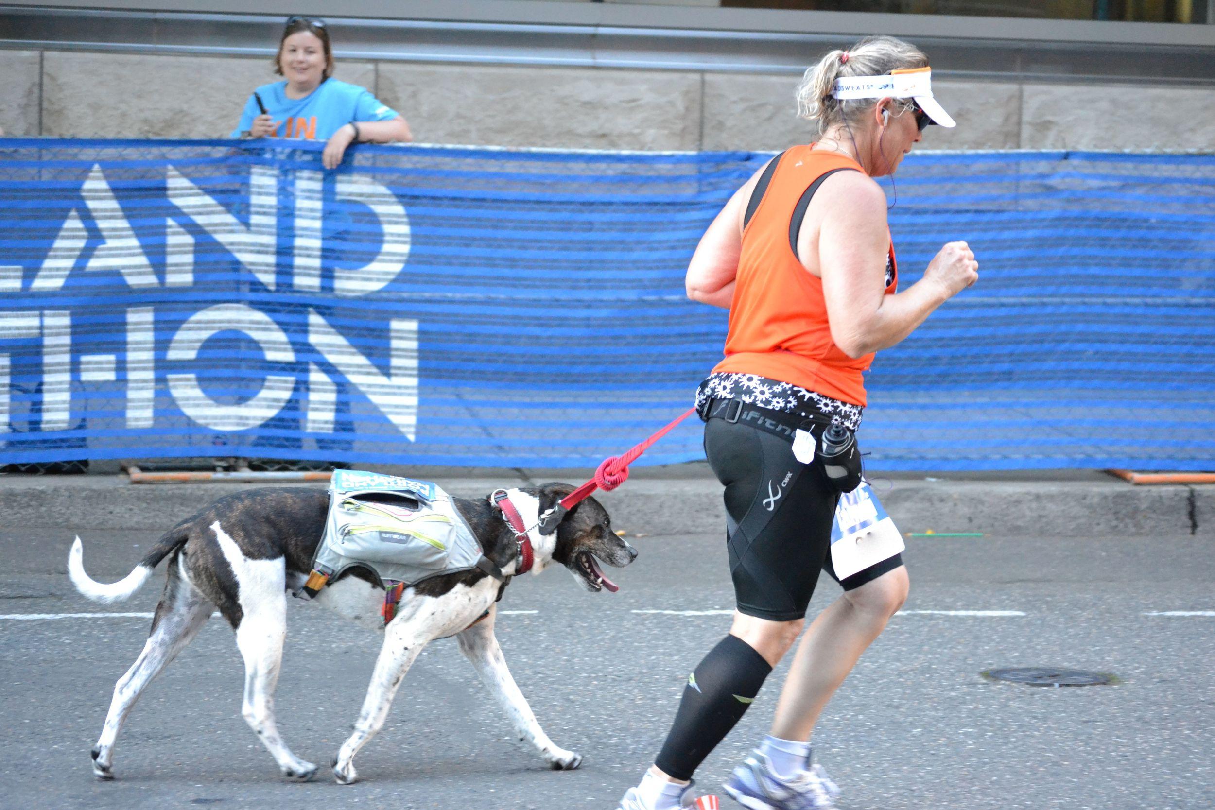 portlandmarathon.dog4