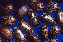 220px-Castor_beans.jpg
