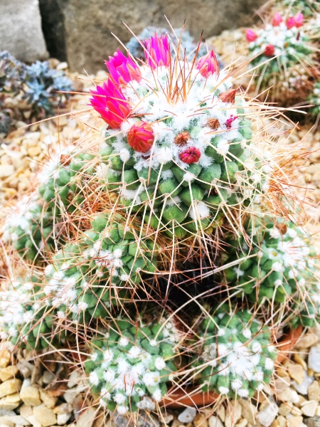 you are kind like this here plant, fear. all kinds of prickly, but also a little pretty too.