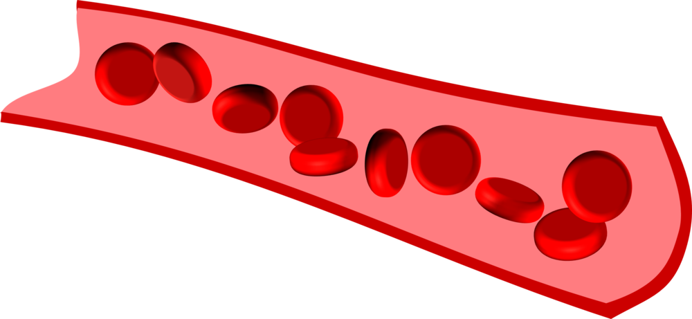 Erythrocytes on the move