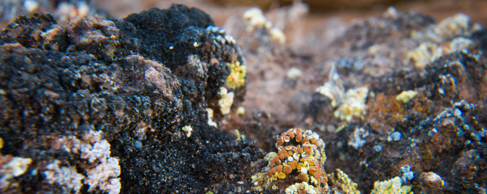 A tiny world of colorful lichens, courtesy of the Canyonlands National Park Service