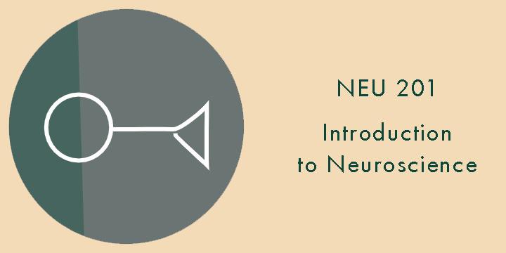 neu201.jpg
