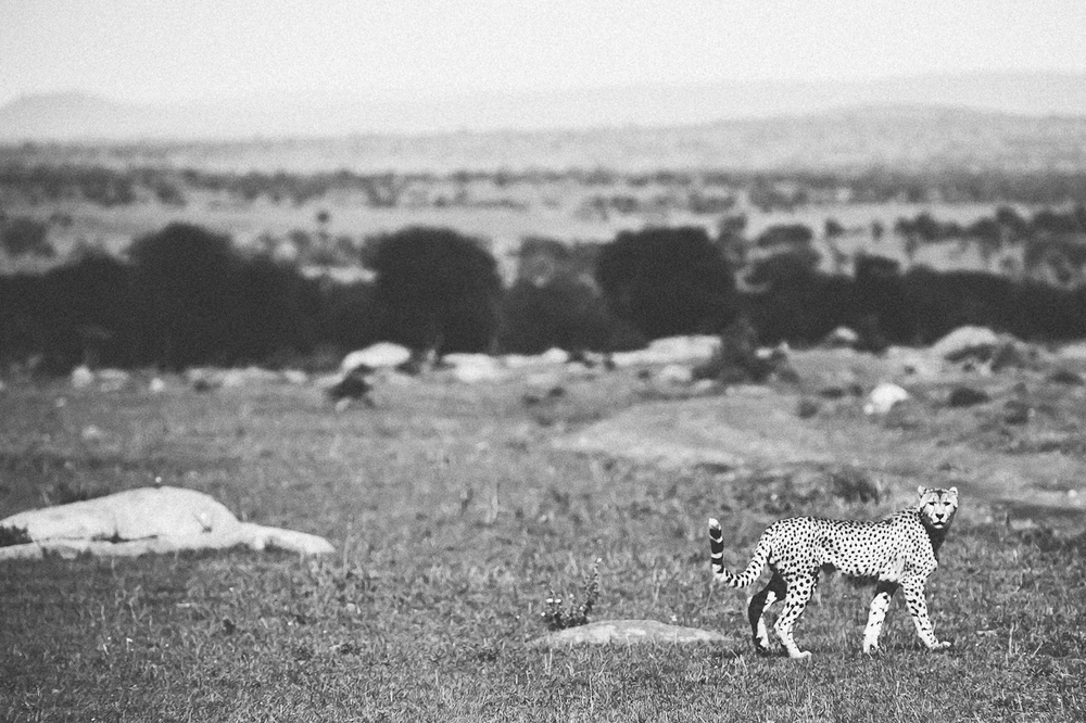 Safari-21.jpg