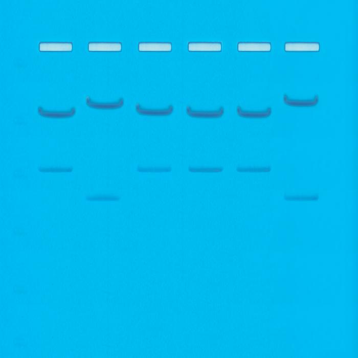 109-DNA Fingerprinting