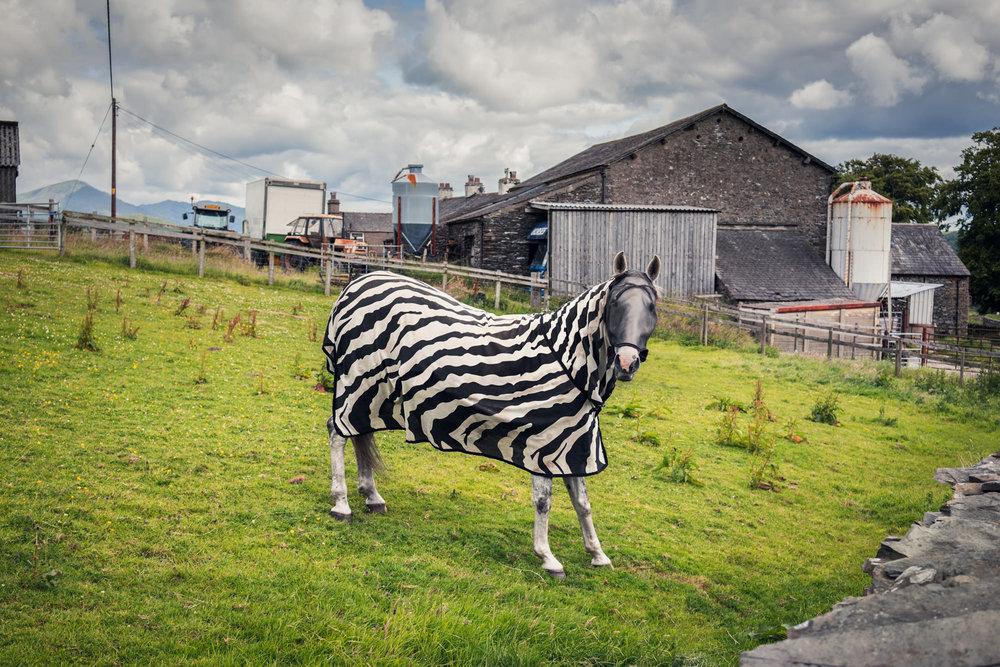 170626_Cumbria-0286-Edit.jpg