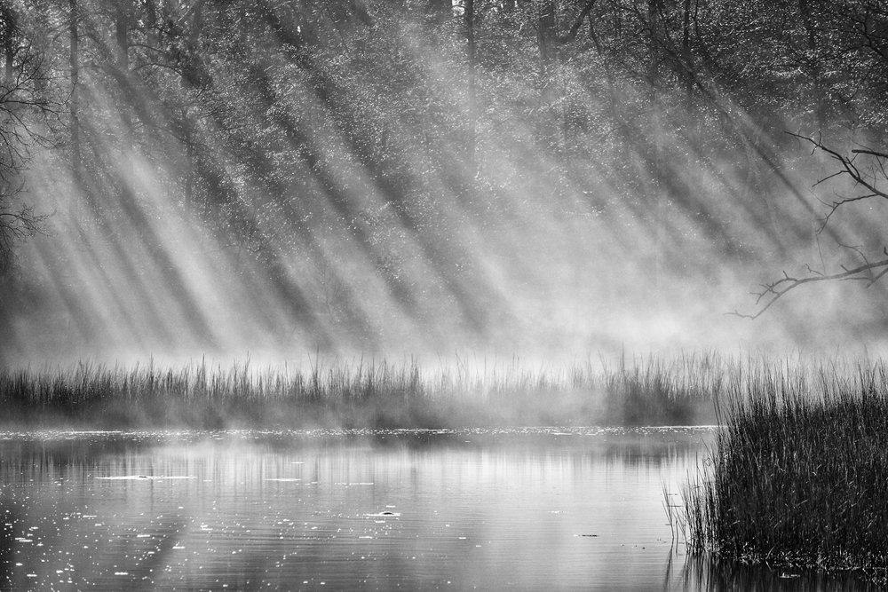 bleakhorn rays.jpg