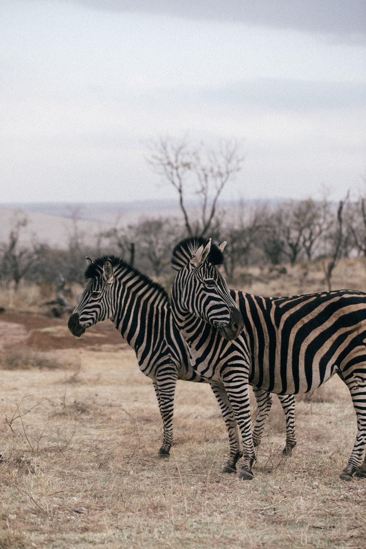 lichipan x South Africa-29.jpg