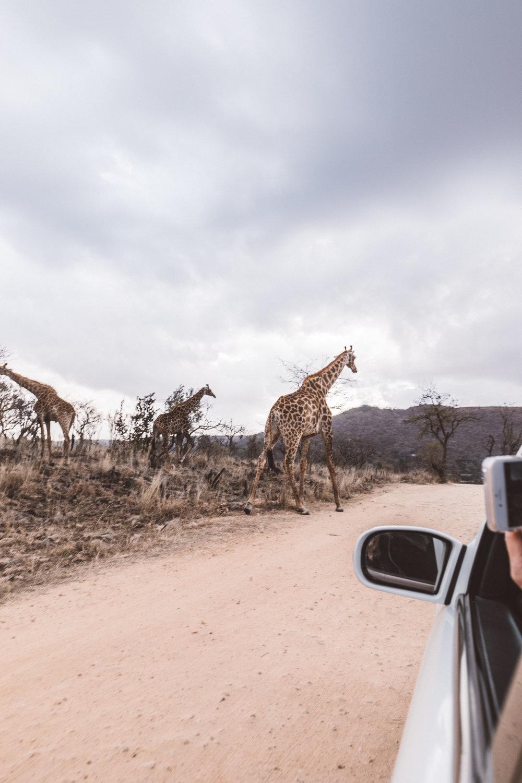 lichipan x South Africa-50.jpg