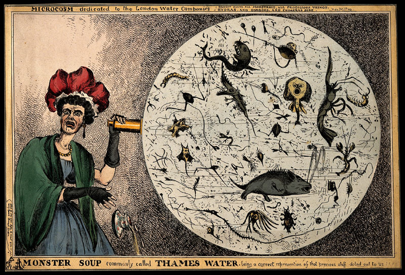 Nineteenth Century Illustration of Microorganisms in the Thames