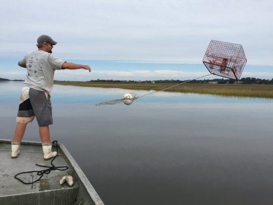 Deploying a blue crab trap