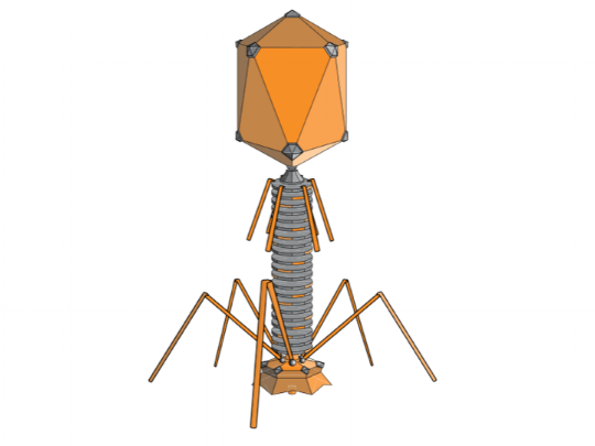 Some viruses look like this, except less like they were built in a robotics makerspace than this drawing might lead one to believe.