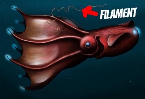Vampire Squid Filament