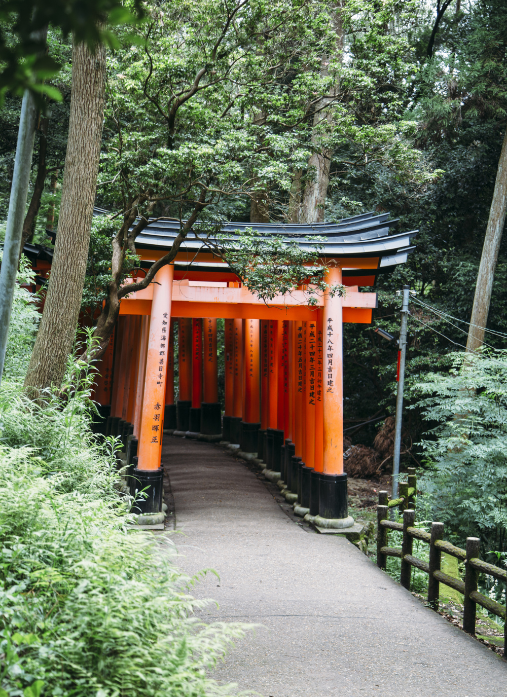 A Sea Of Orange: Exploring The Fushimi Inari Torii Gates