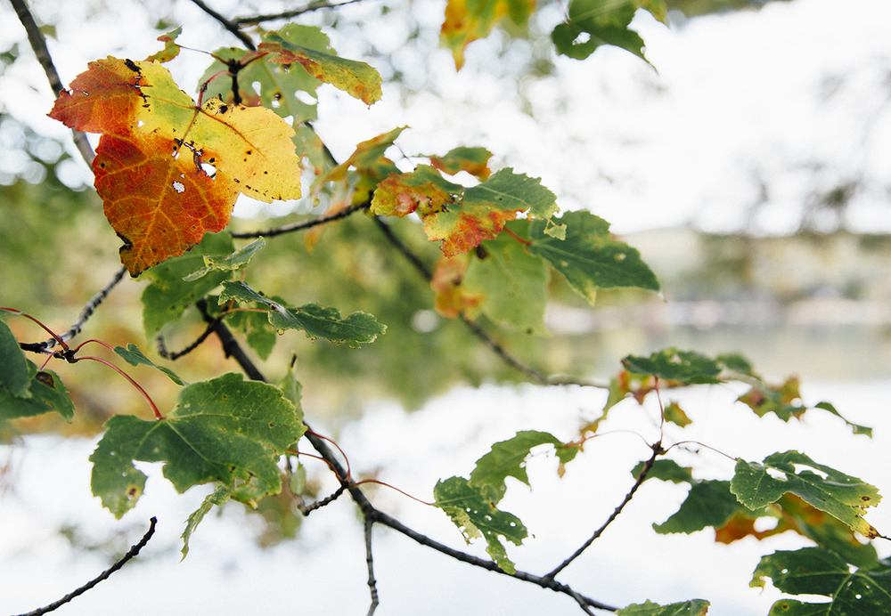 Autumn In The Northeast: Four Simple Ideas For Appreciating Fall This Year