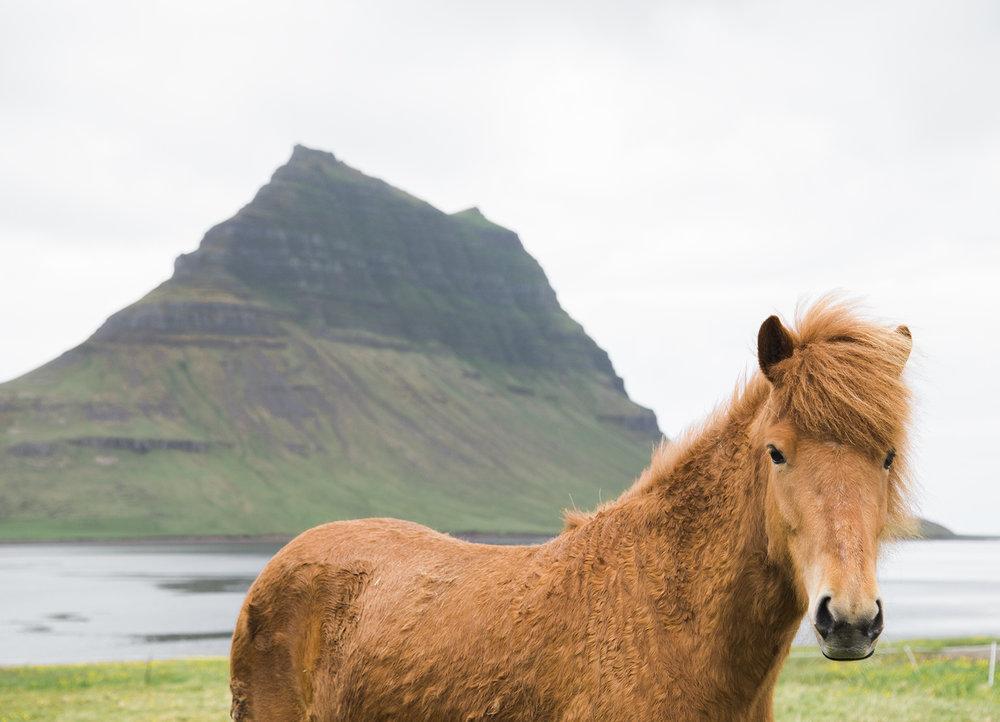 Iceland_0644.jpg