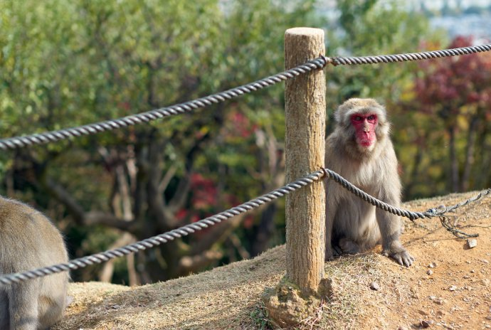Monkey Park Tenryu-ji