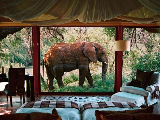 Madikwe Game Reserve, South Africa.jpg