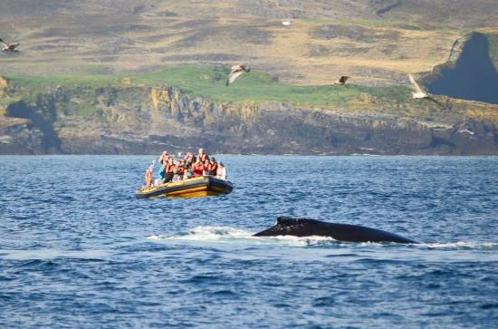 County Cork Whale Watching