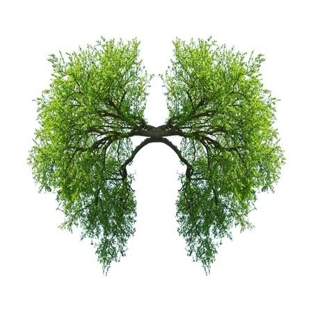 lungs as trees.jpg
