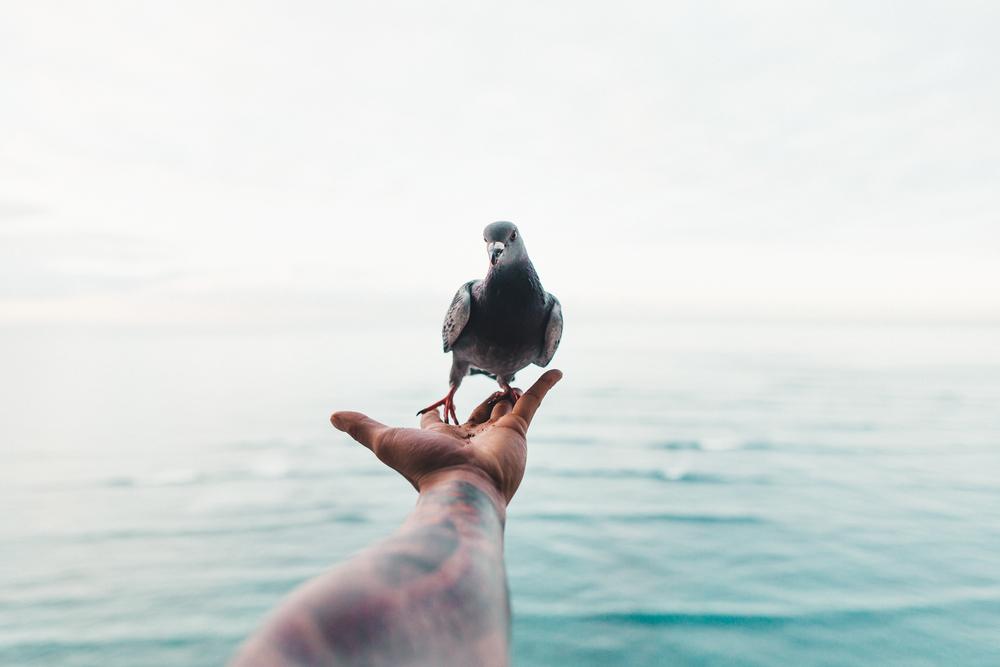 HI birds-110.jpg