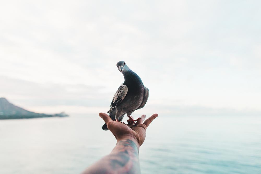 HI birds-151.jpg