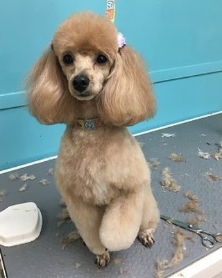 Look at this amazing cut