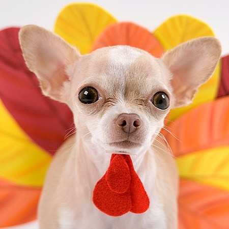 Call us today to secure your pup a holiday spot before the family gets there! 954-563-5674 We will be open for appointments the day before (Wed). #gobblegobble #doggrooming #wiltonmanors #browardpets #bathtime #blackfriday #beattheholidayrush